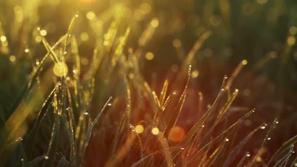 Úchvatná krajina. Rosa kapky, ležící na mladý zelené trávě za úsvitu.