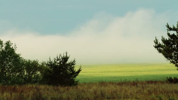 Breathtaking scenery. Beautiful view of green meadow in the mist.