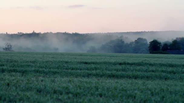 Úchvatná krajina ze zelené louky v mlze