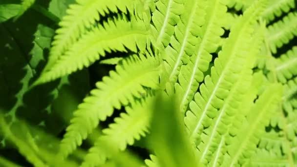 Květinová zahrada. Close-up shot svěžích zelených rostlin z kapradí