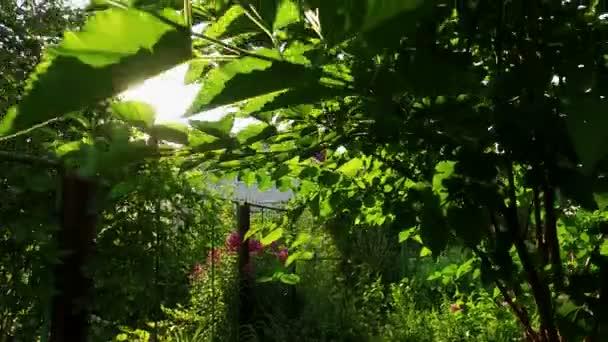Blick auf ein zweistöckiges weißes Privathaus durch Baumzweige. 4k