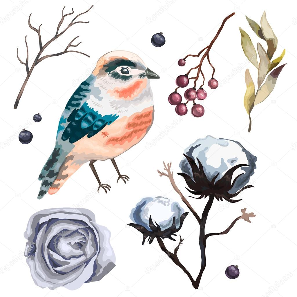 Collection vector flowers , branches, cotton, bird,