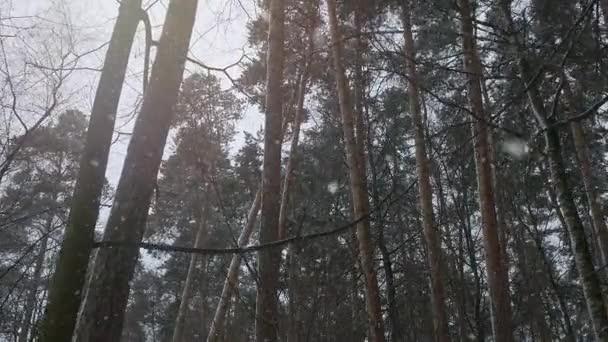 kamera se pomalu pohybuje zimním lesem.