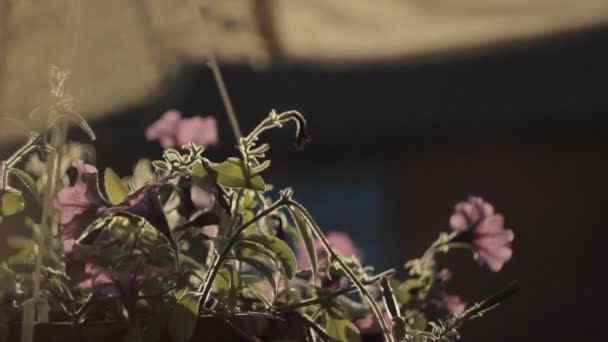 Květiny na černém pozadí, podsvícený