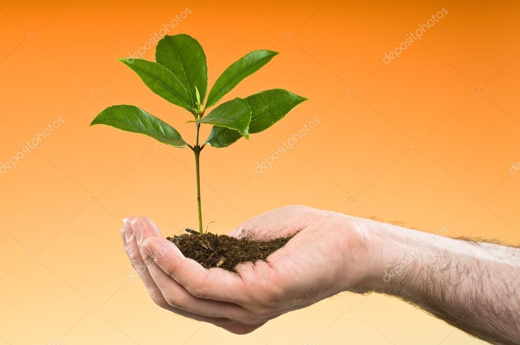 hand holding a tree isolated on orange