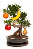 Bonsai tree with big apple isolated on white