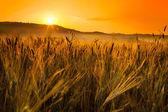 Toskánsko pšeničné pole kopec na východ slunce