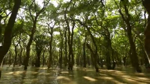 Palude di mangrovie cambogiano