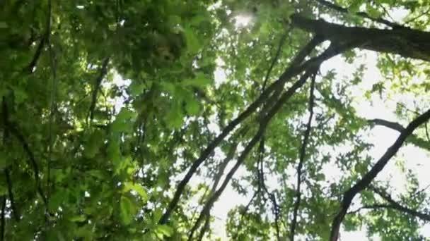 Immagini di alberi mossi dal vento