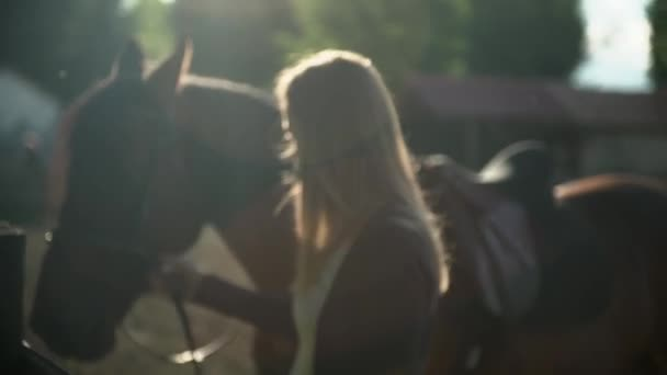 Close up of a woman holding her horse by the rope and stroking it gently on the neck. Blonde Woman and her brown horse standing in a riding school during sunset.