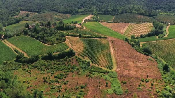 Aerial view of countryside in Tuscany, cultivated land, agricultural fields. In the background pine forest, green vegetation. Tuscan countryside shot with drone at summer time.