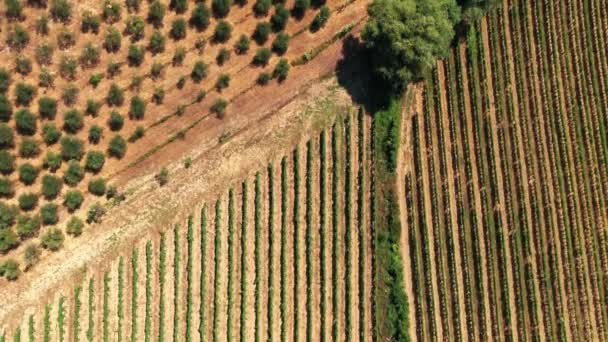 Tuscan countryside shot with drone at summer time. Top view of amazing cultivated fields in hot weather, arid fields,green trees,olive trees