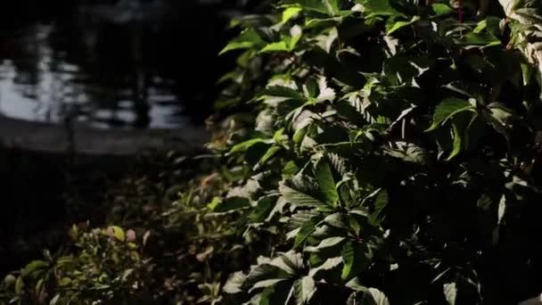 schöne Blätter wachsen in den Büschen im Garten