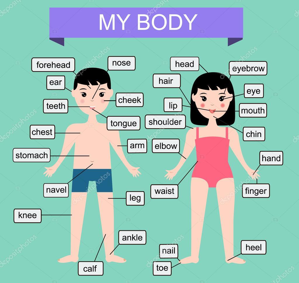 Mein Körper. Lernen menschliche Körperteile. Pädagogische Vektor ...