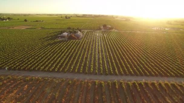 Kalifornie Víno Země západ slunce Letecký snímek vinic sledování vlevo