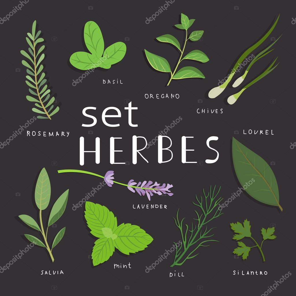Aromatic herbs set. Fresh herbs and spices set. Vector illustration. eps 10.
