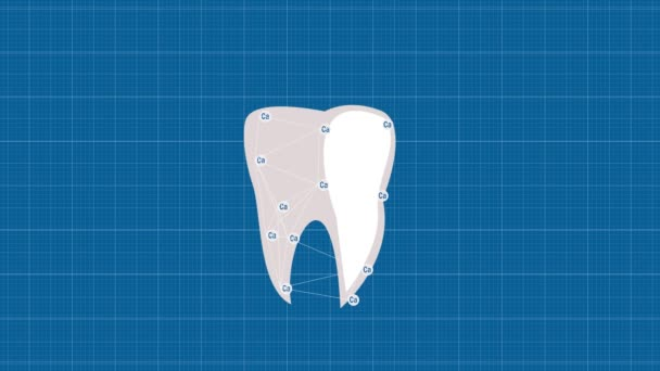Tooth protected by calcium. Animated tooth on tracing paper. Tooth enamel protection