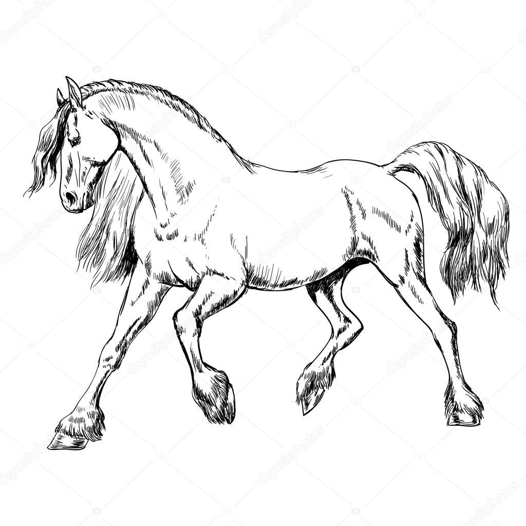 Kleurplaat Galopperend Paard Overzicht Paard Schets Stockvector 169 Tanjasum84 Gmail