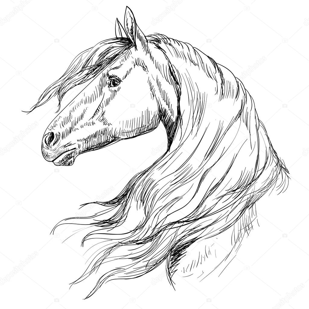 Horse Head Outline Outline Horse Head Stock Vector C Tanjasum84 Gmail Com 99099056