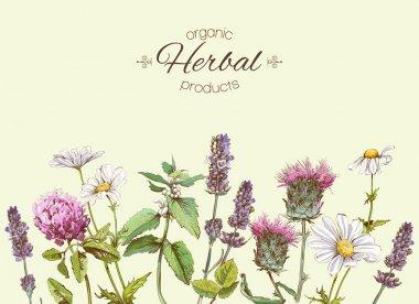Medichinal herbs banner