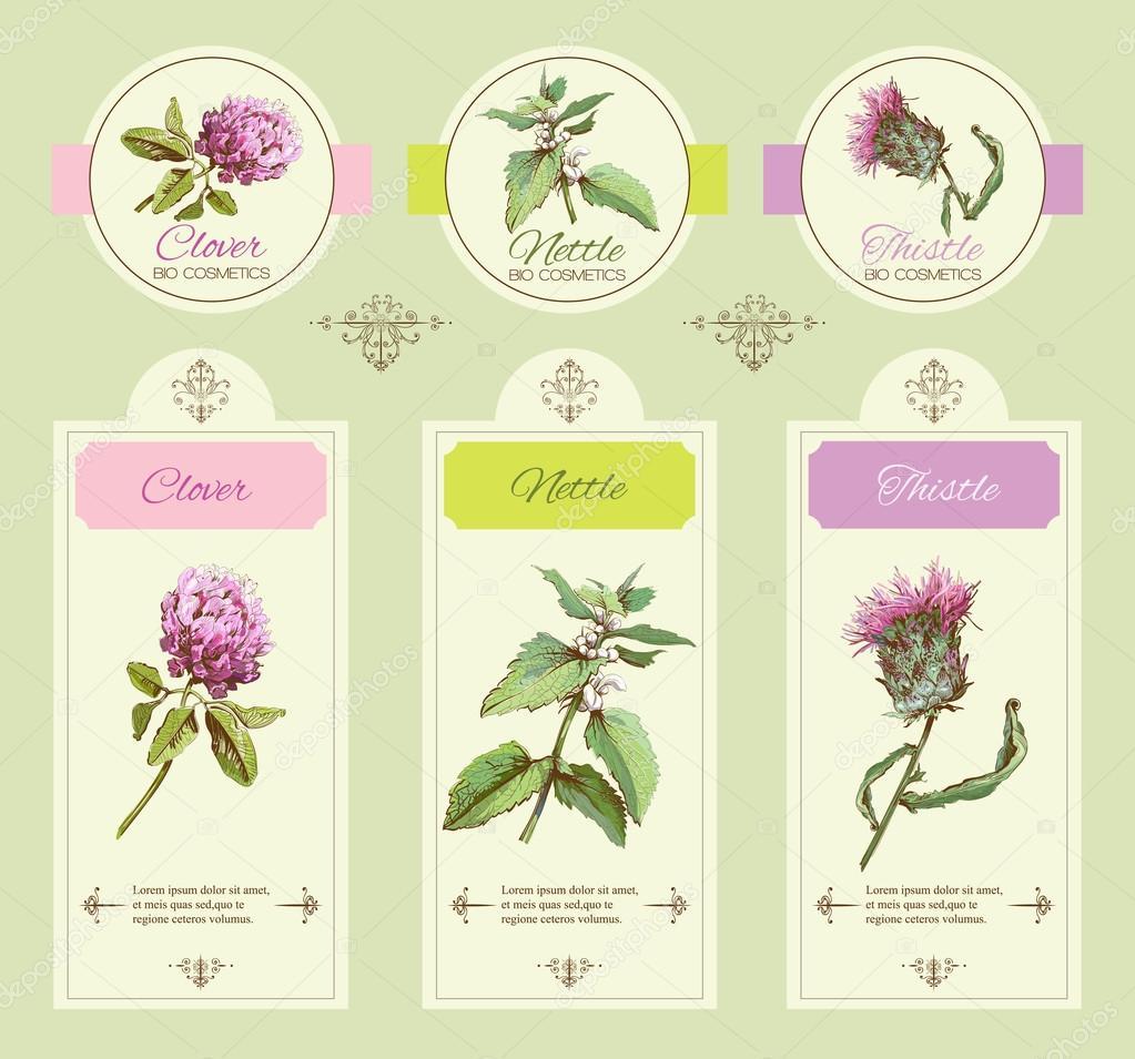 Green Herbal Banner Stock Vector C Purplebird18 102246944