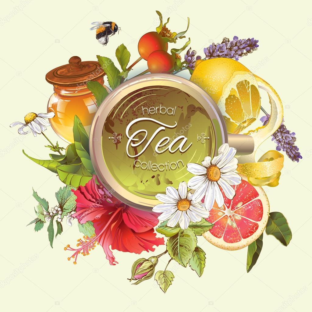 Vector vintage herbal banner