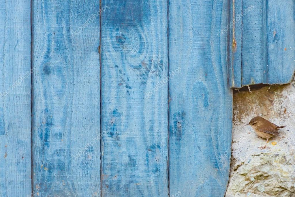 Wren Perching By Blue Barn Door U2014 Stock Photo