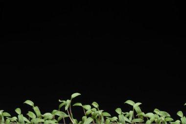 """Картина, постер, плакат, фотообои """"семена помидоров постеры печать картины фото фотографии"""", артикул 104734108"""
