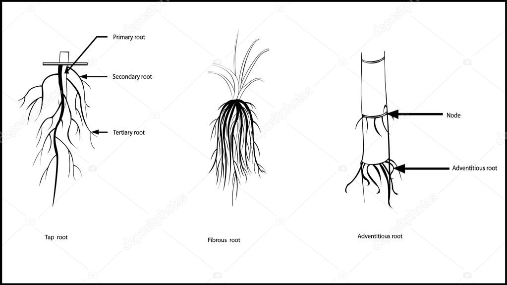 Types of roots stock vector sanjayart 107474890 types of roots all elements are in separate layers color can be changed easily vector by sanjayart ccuart Image collections