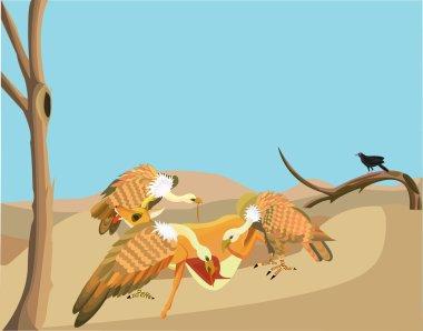 Vulture eat Dead Animal