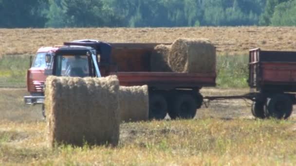 Traktoru načítání velké role sklizeň slámy. Práce v oboru