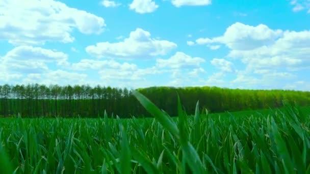 Zöld mező és felhős ég