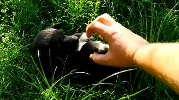 kříženec štěně hra s rukou