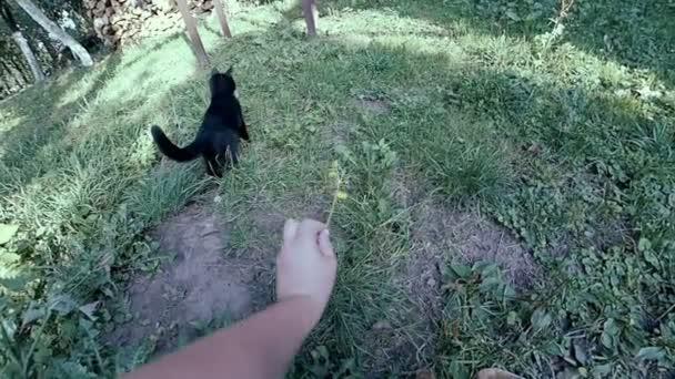 Kočičí hra s květinou