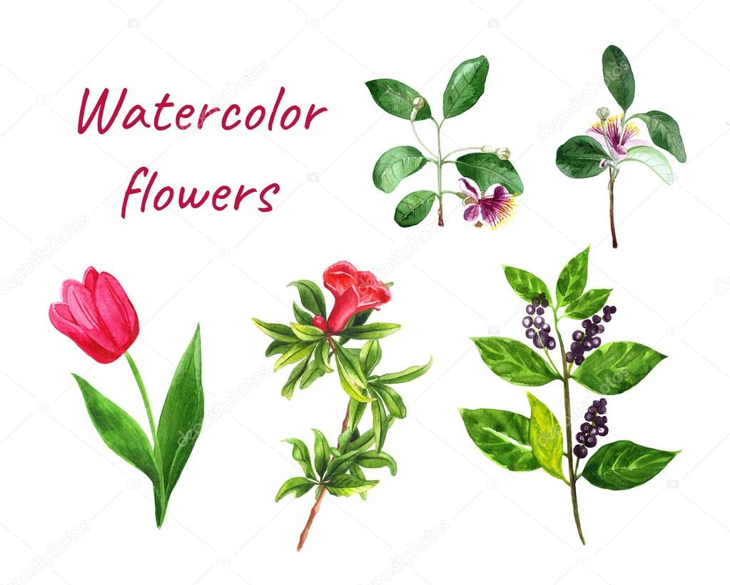 Watercolor set of flowers with pomegranate, feijoa, tulip, berries ...
