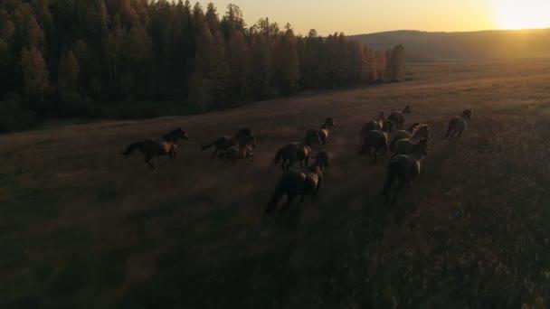 Luftgefühlsfilm Orange Sonnenuntergang Sonne Große Herde von Pferden galoppiert über die Wiese in Richtung Sonnenstrahlen. Filmflug über Wildpferde. Herbst Natur einzigartige Landschaft. Zeitlupenaufnahme