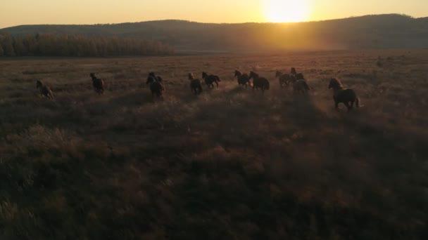 Epische Herde von Pferden, die schnell über die Weide laufen. Romantische orangefarbene Morgendämmerung Sonnenuntergang Sonne Horizont Tierwelt. Schöne Zeitlupenaufnahmen. Stärke Freiheit, emotionale, unglaubliche Schuss. Antenne 4k