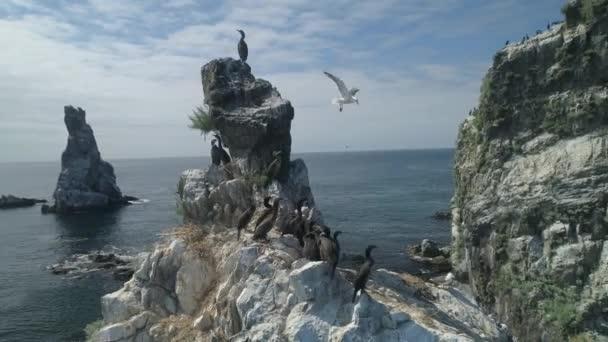 Luftumlaufbahn Nahaufnahme erwachsener Kormorane große Seevögel in großer Gruppe, die auf scharfen Felsen kekkura hocken. Nistplatz. Inspirierende wilde Tierwelt. Sonniger Tag bewölkt blauen Himmel
