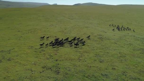 Flucht zusammen mit einem epischen Galopp über endlose Steppenherden von reinrassigen schwarzen Pferden. Wildpferde in ihrer natürlichen Umgebung. Emotionale Naturlandschaft. Macht der Stärke