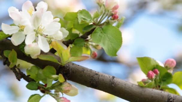 Beruška, procházení na větev stromu