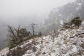 Fotografie Těžký sníh v horách