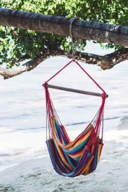 Hammock in a tree on the beach