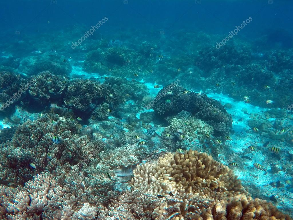 Snorkeling Near Tropical Island Underwater View With Sea Bottom