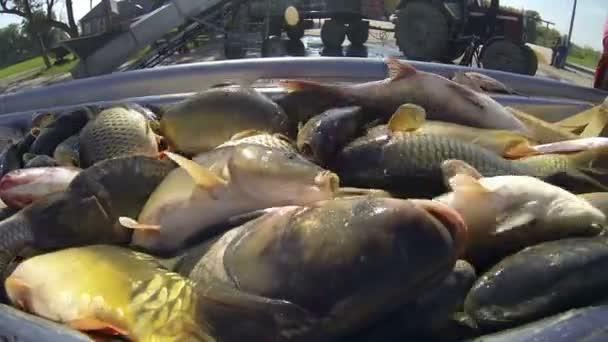 Rybářský průmysl na rybí farmě