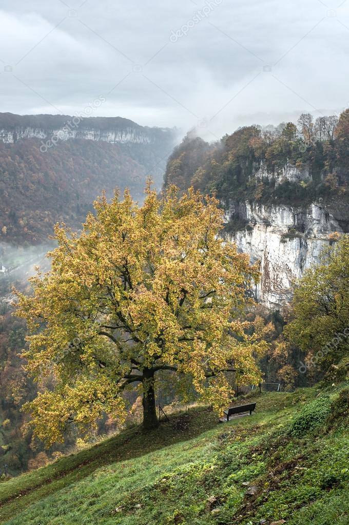 Autumn trees over the valley