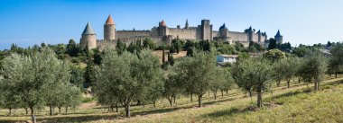 Olive field with the ancient city towers