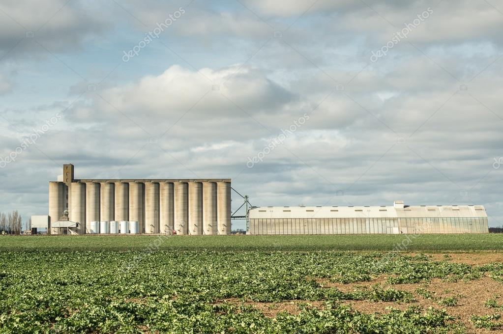 Granaries for storing wheat