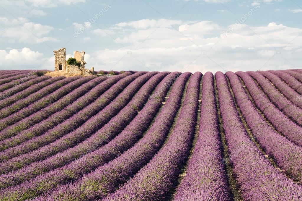 House ruin in fields of lavender