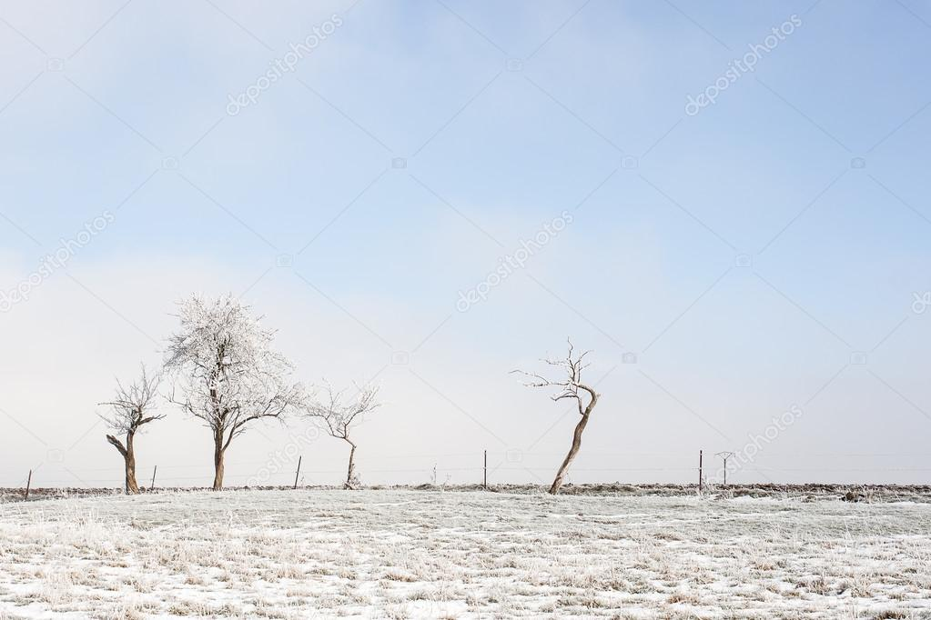Bare trees on the fields