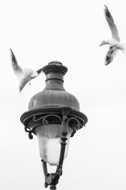 Seagulls flying over a lamppost